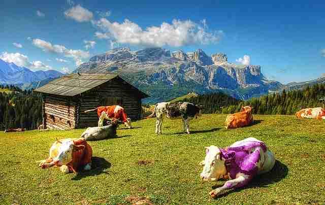 Alla ricerca della mucca viola: come creare un prodotto/servizio straordinario