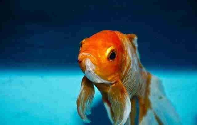 Battere il pesce rosso. Come avere successo nel xxi secolo
